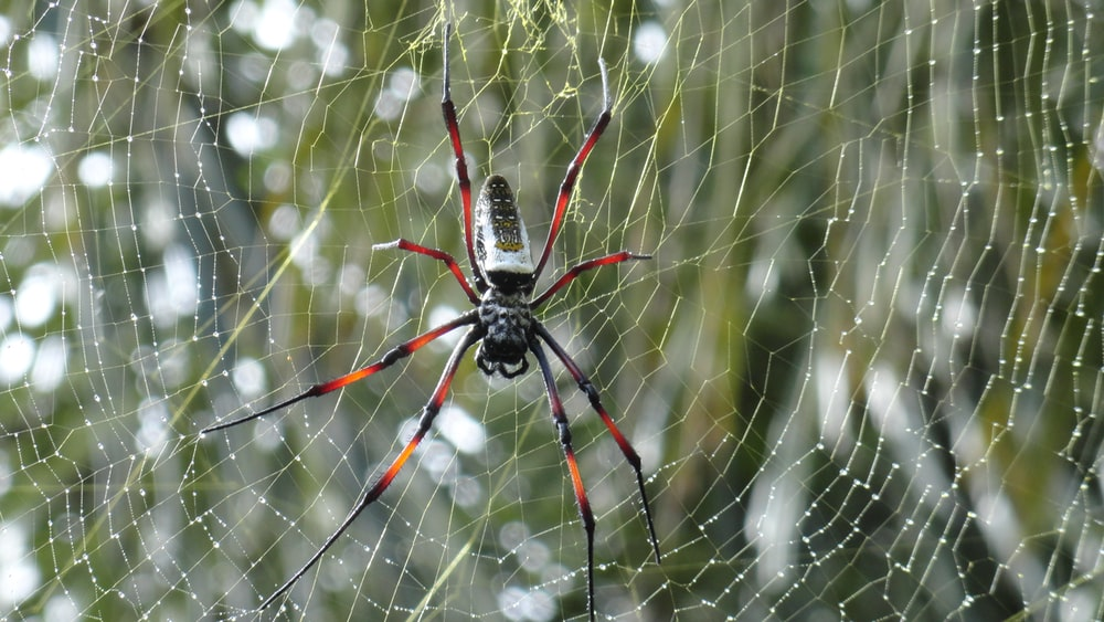 selective focus photography of black and brown spider on spiderweb during daytime