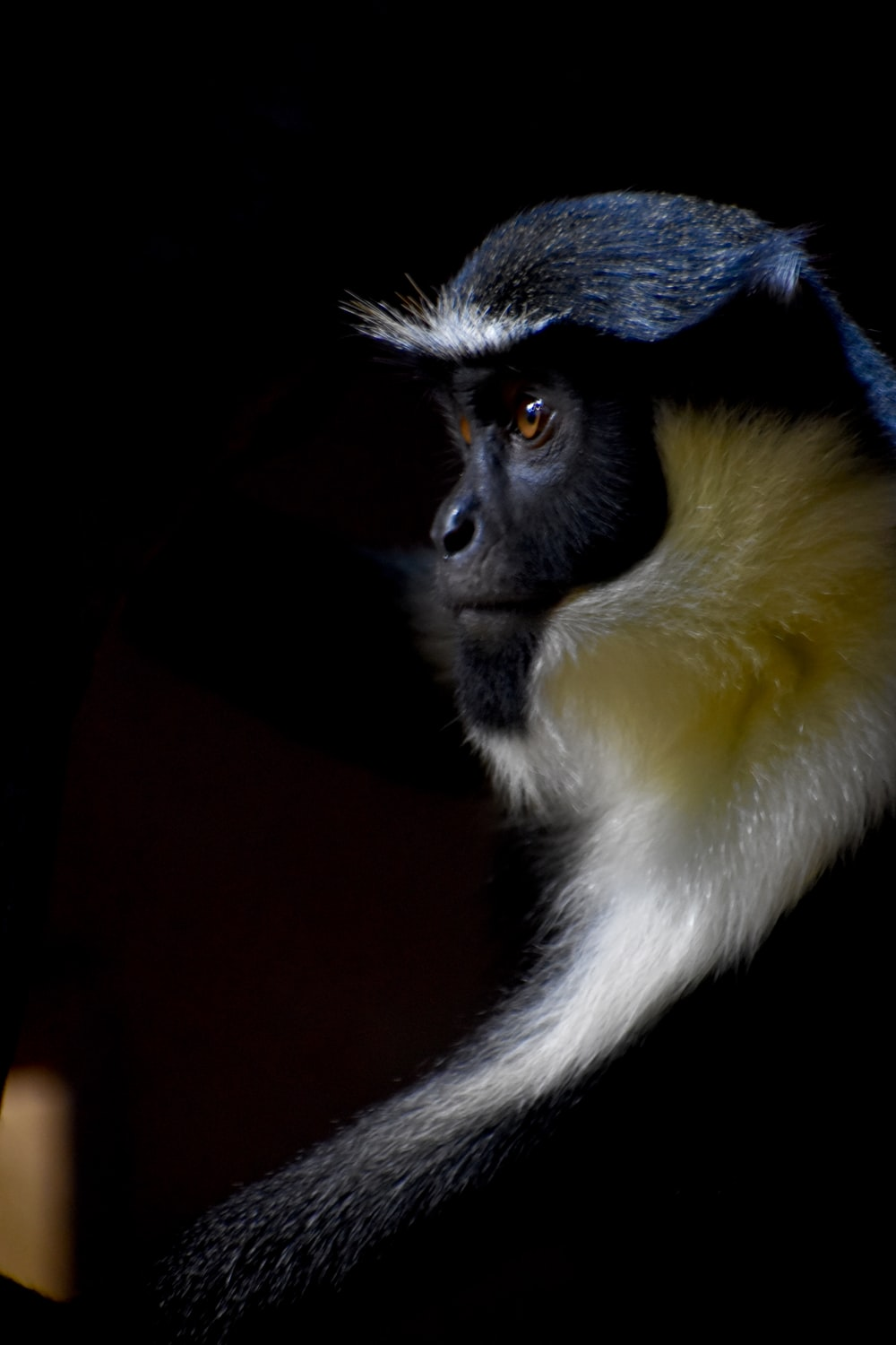 brown and yellow monkey