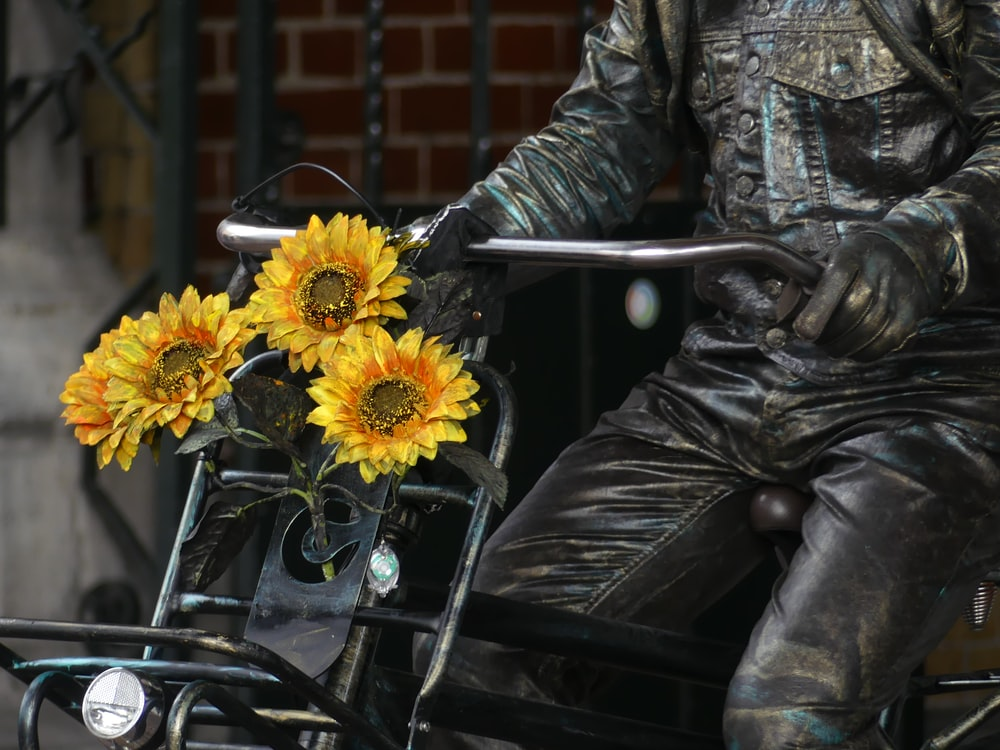yellow sunflower on grey metal bicycle