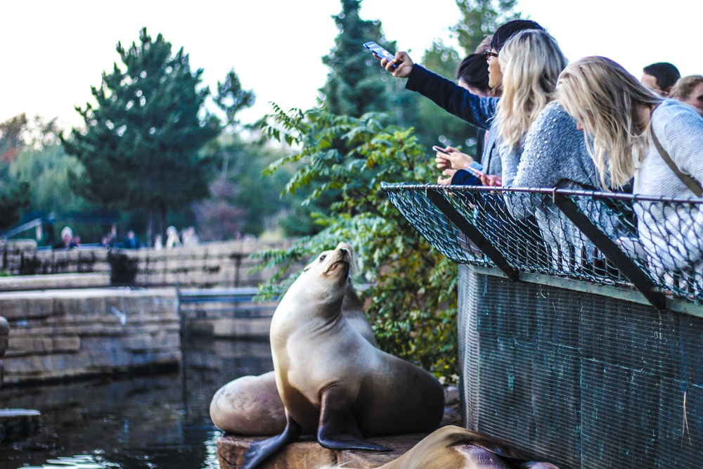 people leaning on metal handrails taking picture of sea lion