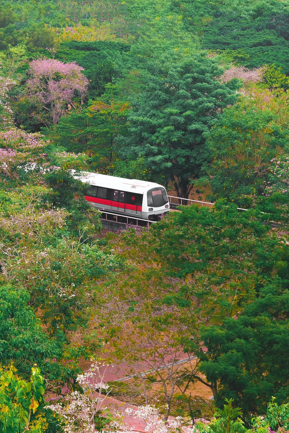 white and red train near trees
