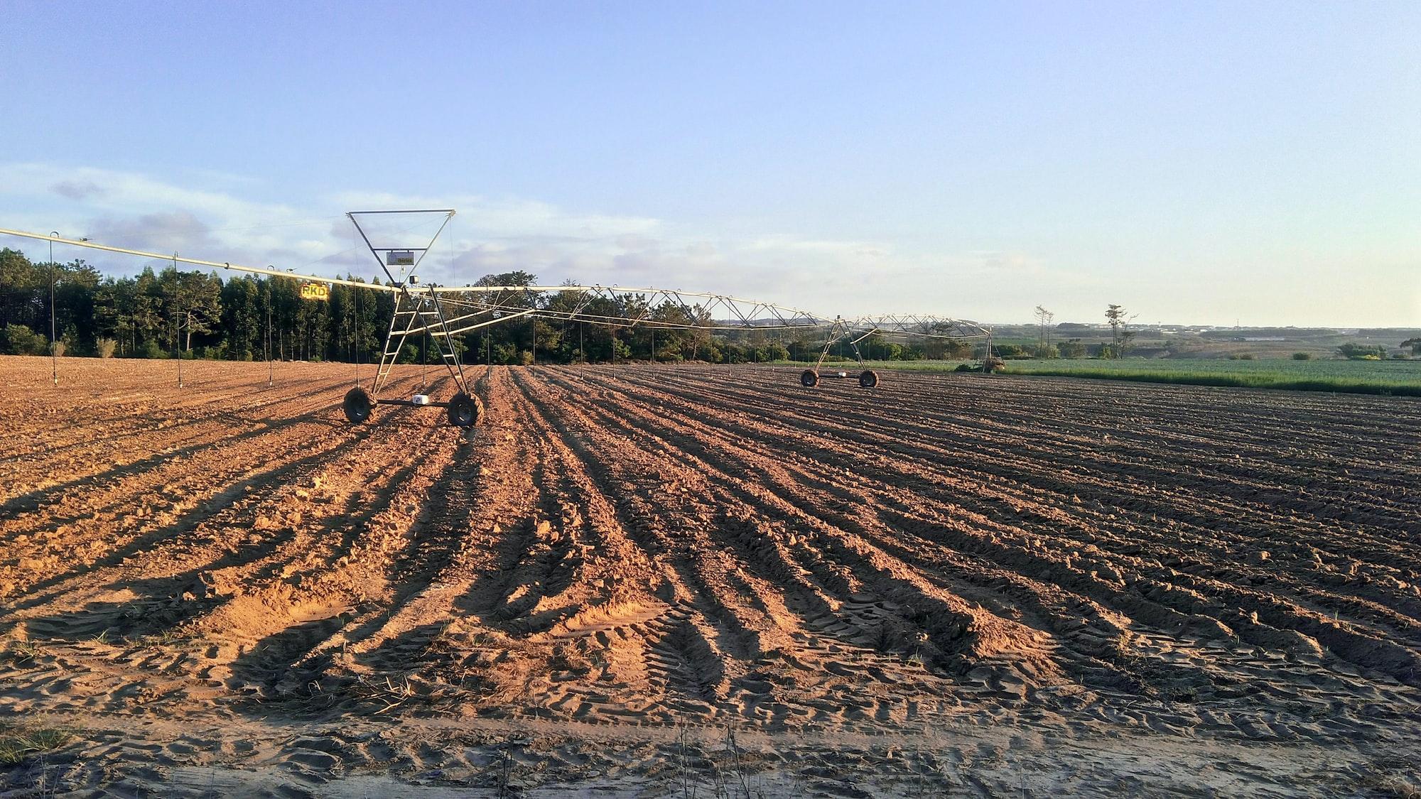 Hauptbild von so-werden-kartoffeln-angebaut