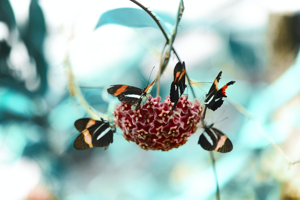 red and white petaled flowers and five assorted-color butterflies