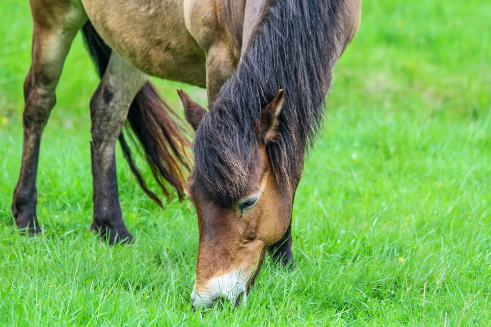 brown horse on green grassland