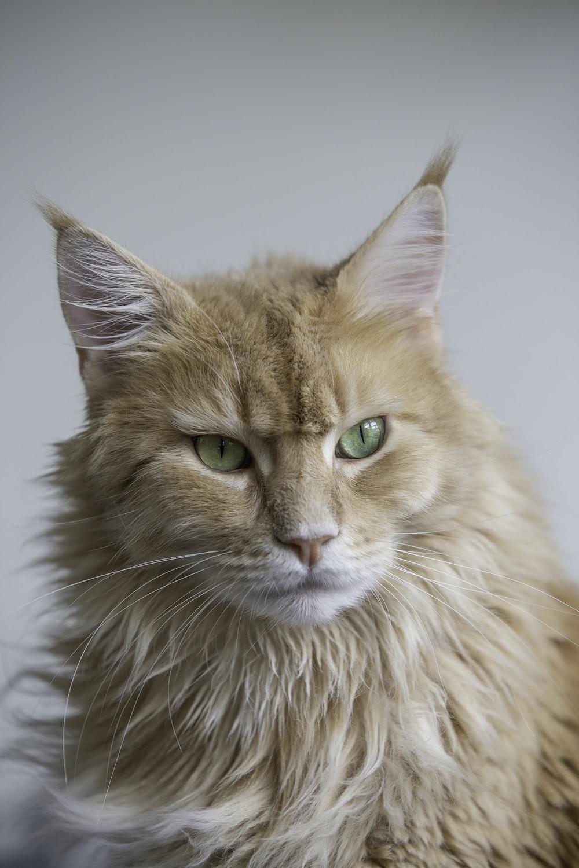 shallow focus photo of orange cat