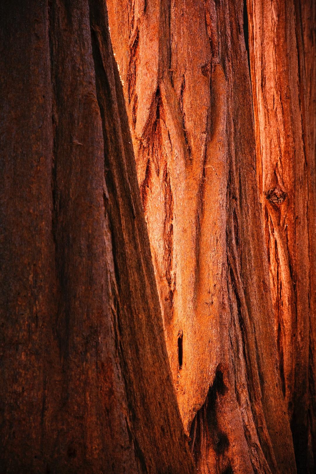 The Big Trip   Sequoia National Park - Explore more at explorehuper.com