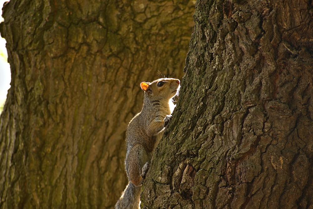 brown squirrel on tree log