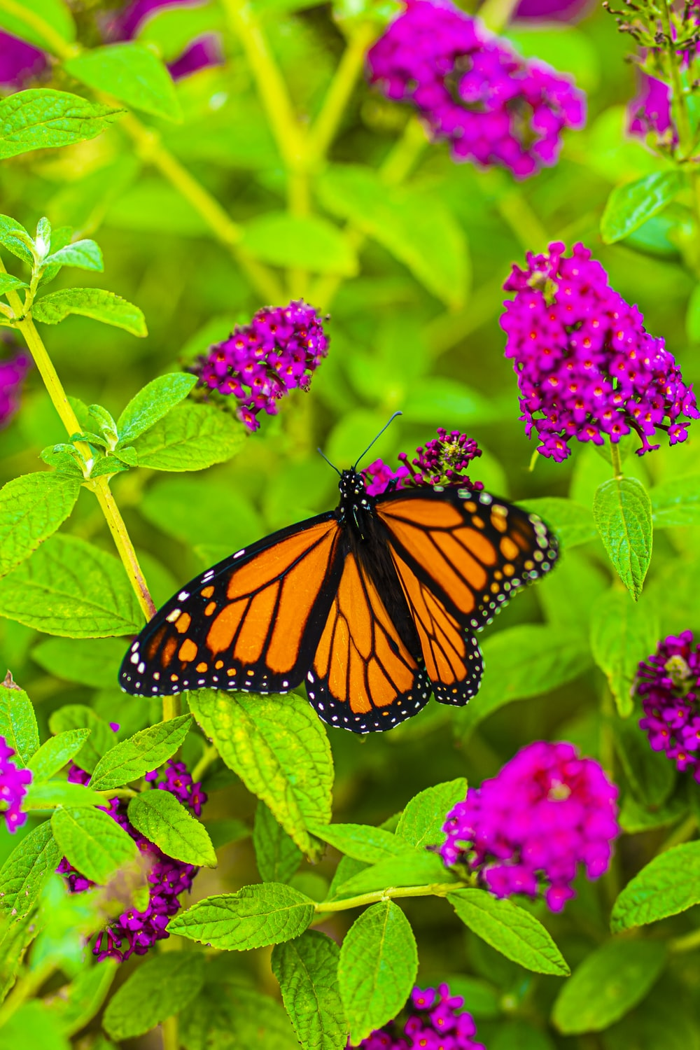 close-up photography of monarch butterfly perching on plant