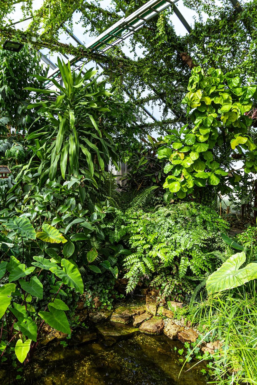 green plants in garden room