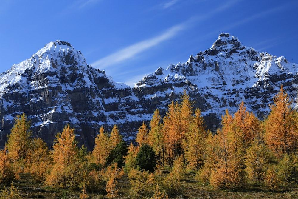 tall trees near mountain under blue sky
