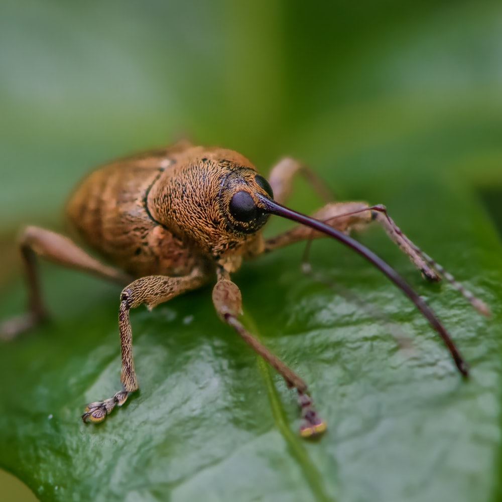 selective focus photography of a brown crawling insect on green leaf
