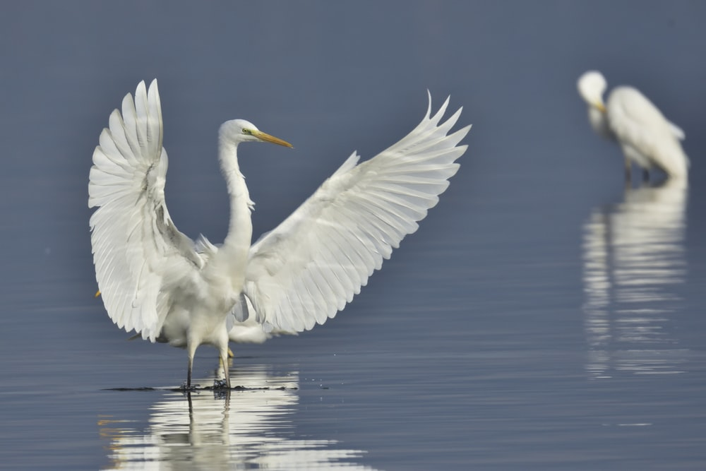 time-lapse photography of a white bird flapping its wings