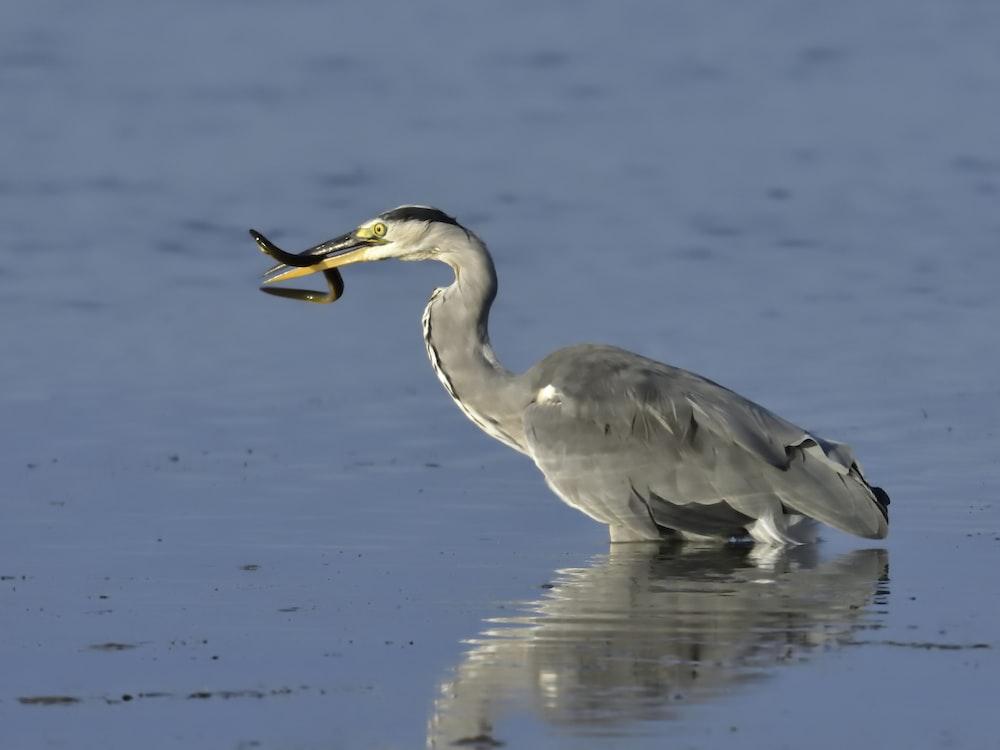 gray bird on body of water