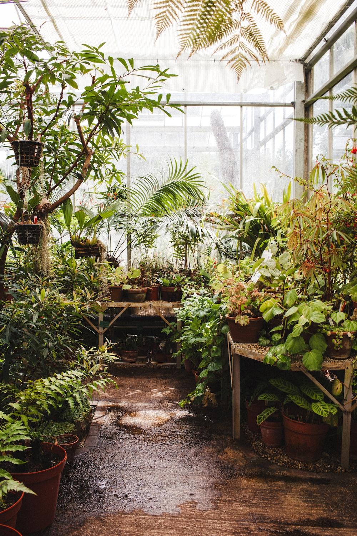 assorted plaints inside greenhouse