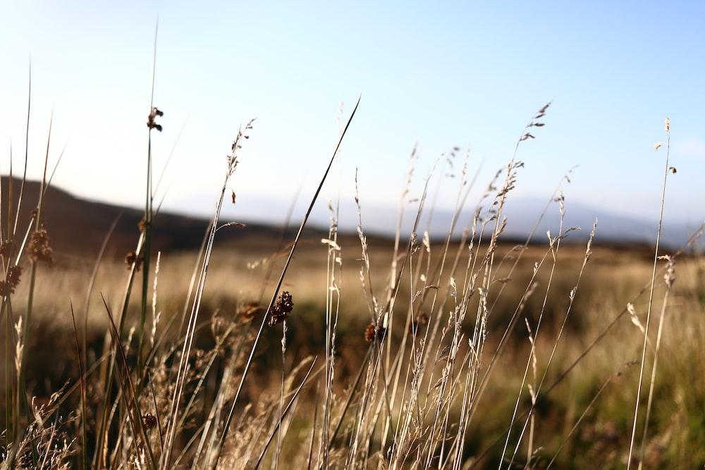 shallow focus photo of grass