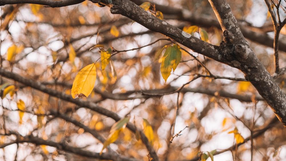 green-leafed tree avocado tree