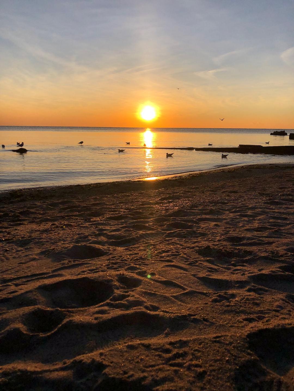 Seashore sunrise with birds bathing in the sun
