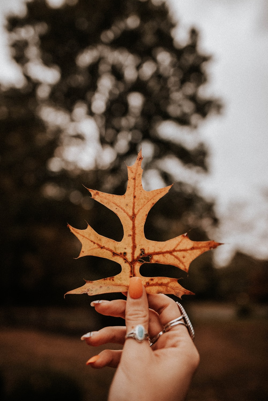 brown dried leaf macro photography