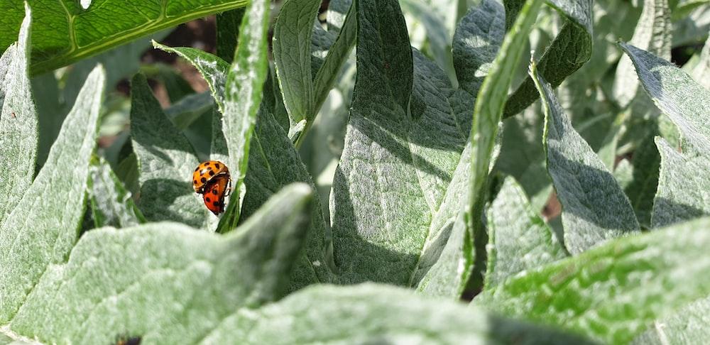 lady bug on leaves