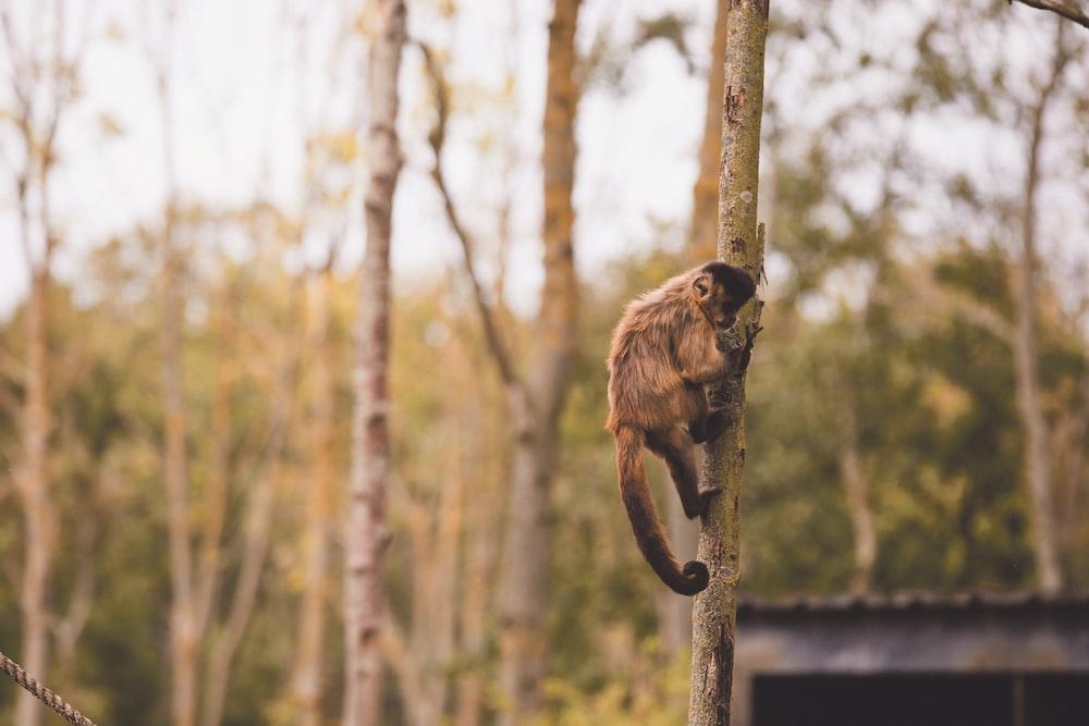 brown and black monkey on tree bark