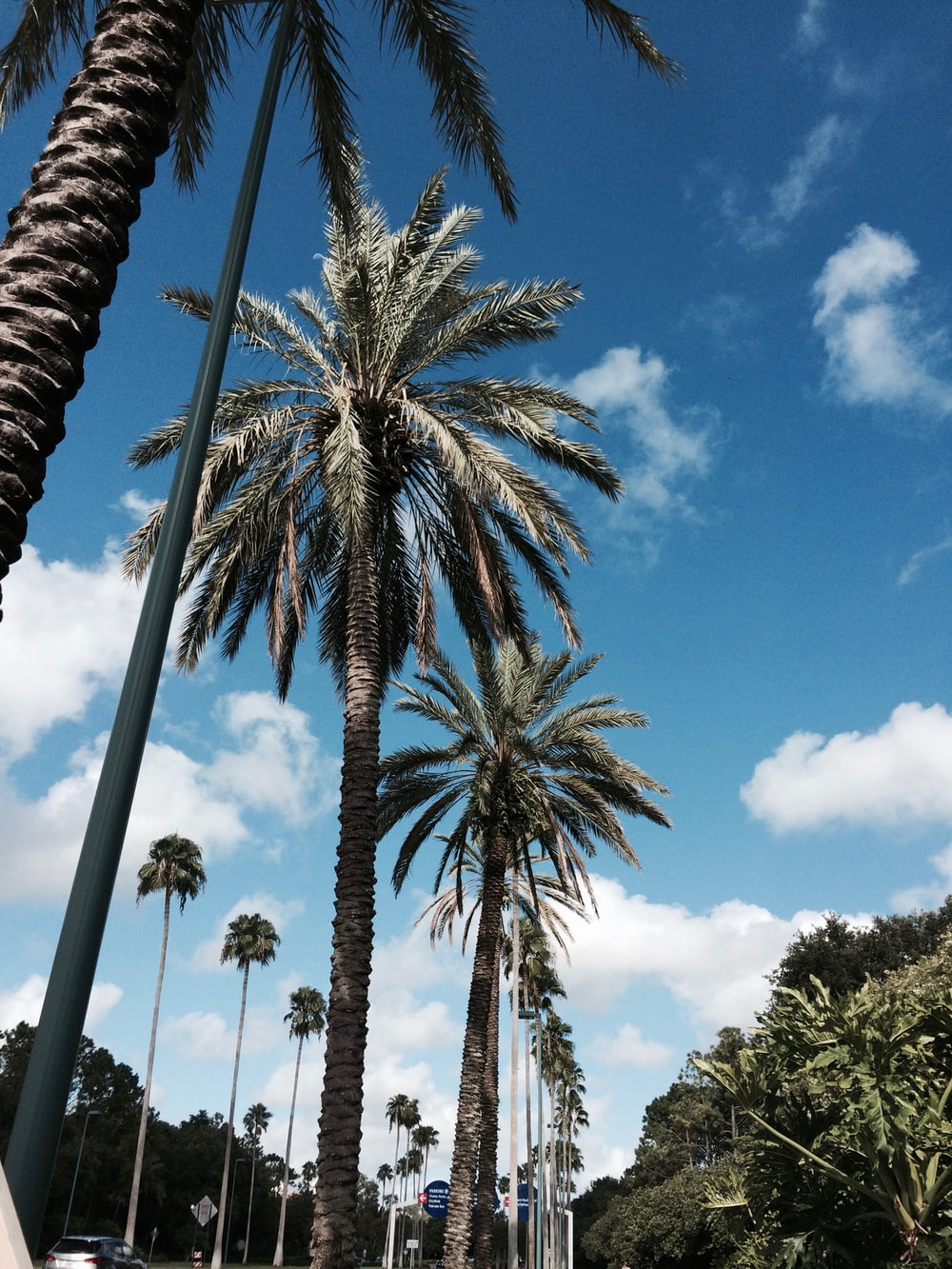 green-leafed palm trees during daytime