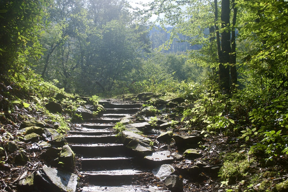 photo of forest stairs