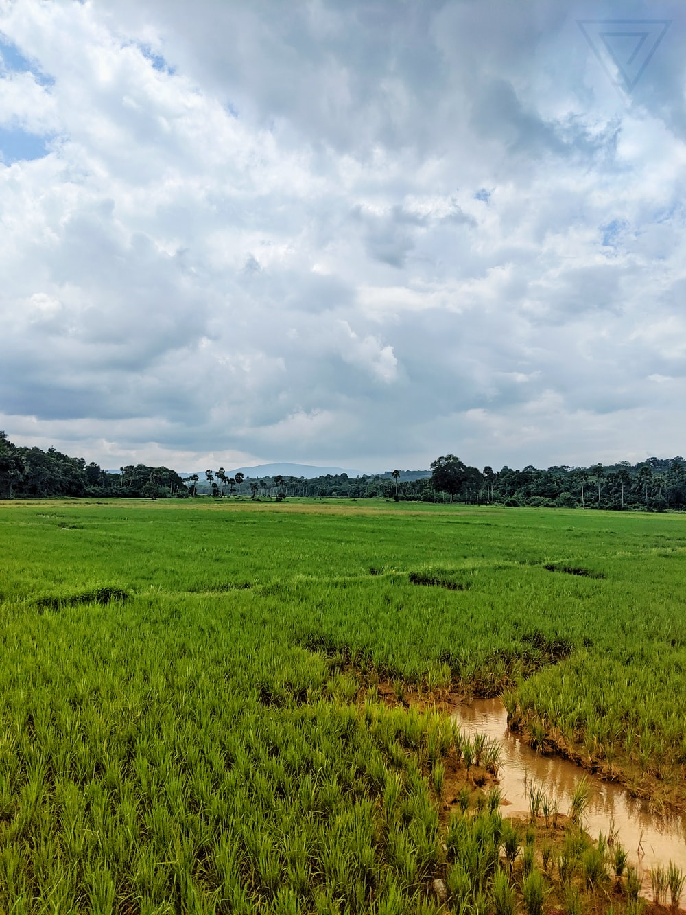 green farm field photo