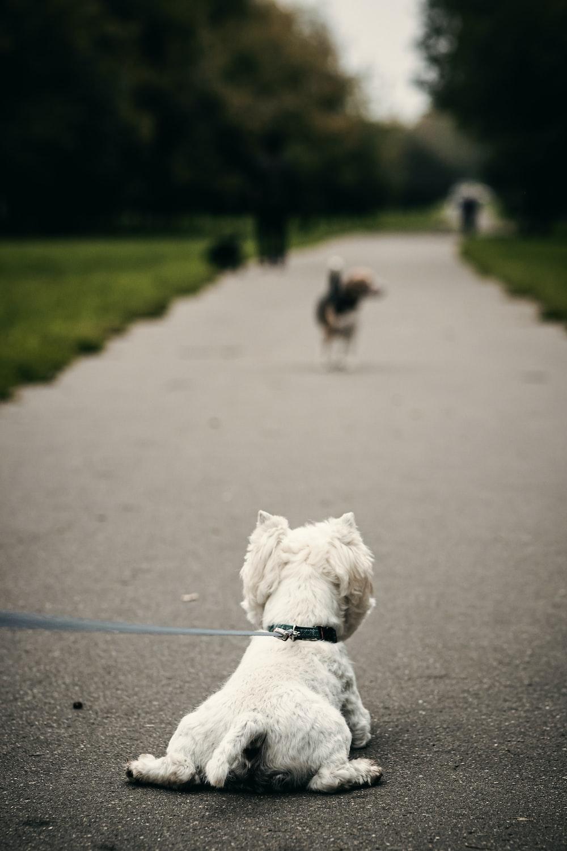 white dog sitting on pavement