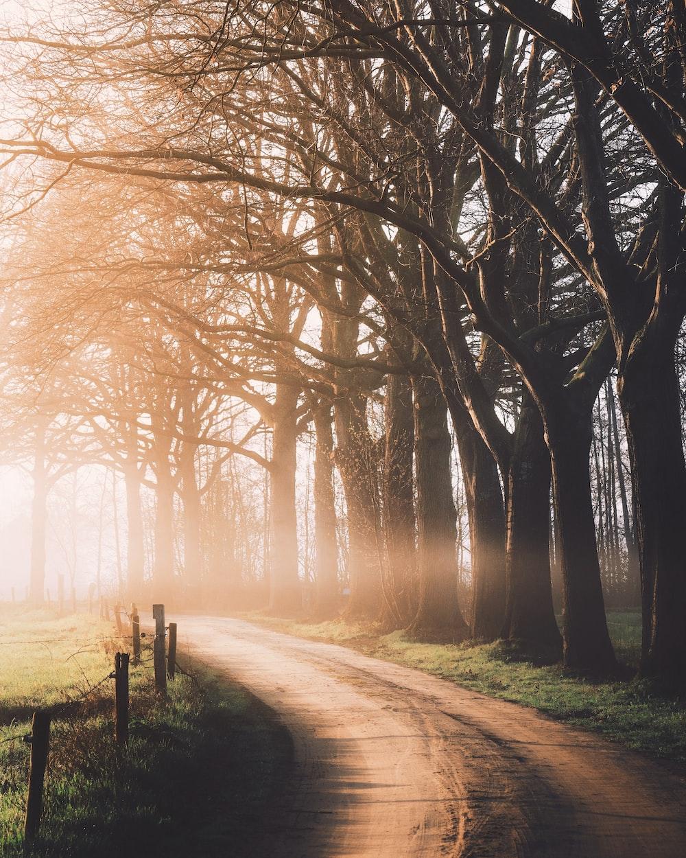 dirt-road beside trees