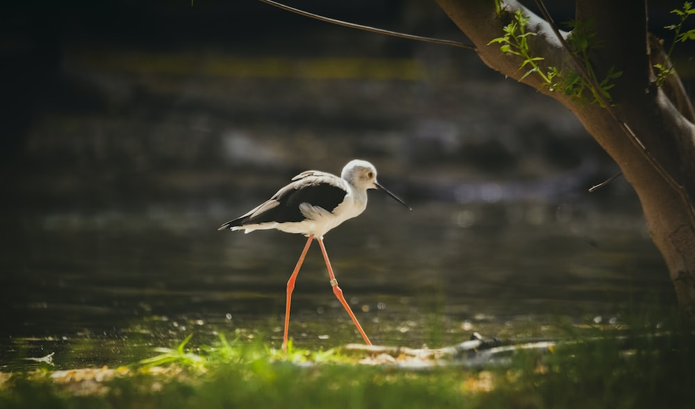 white and black bird on body of water
