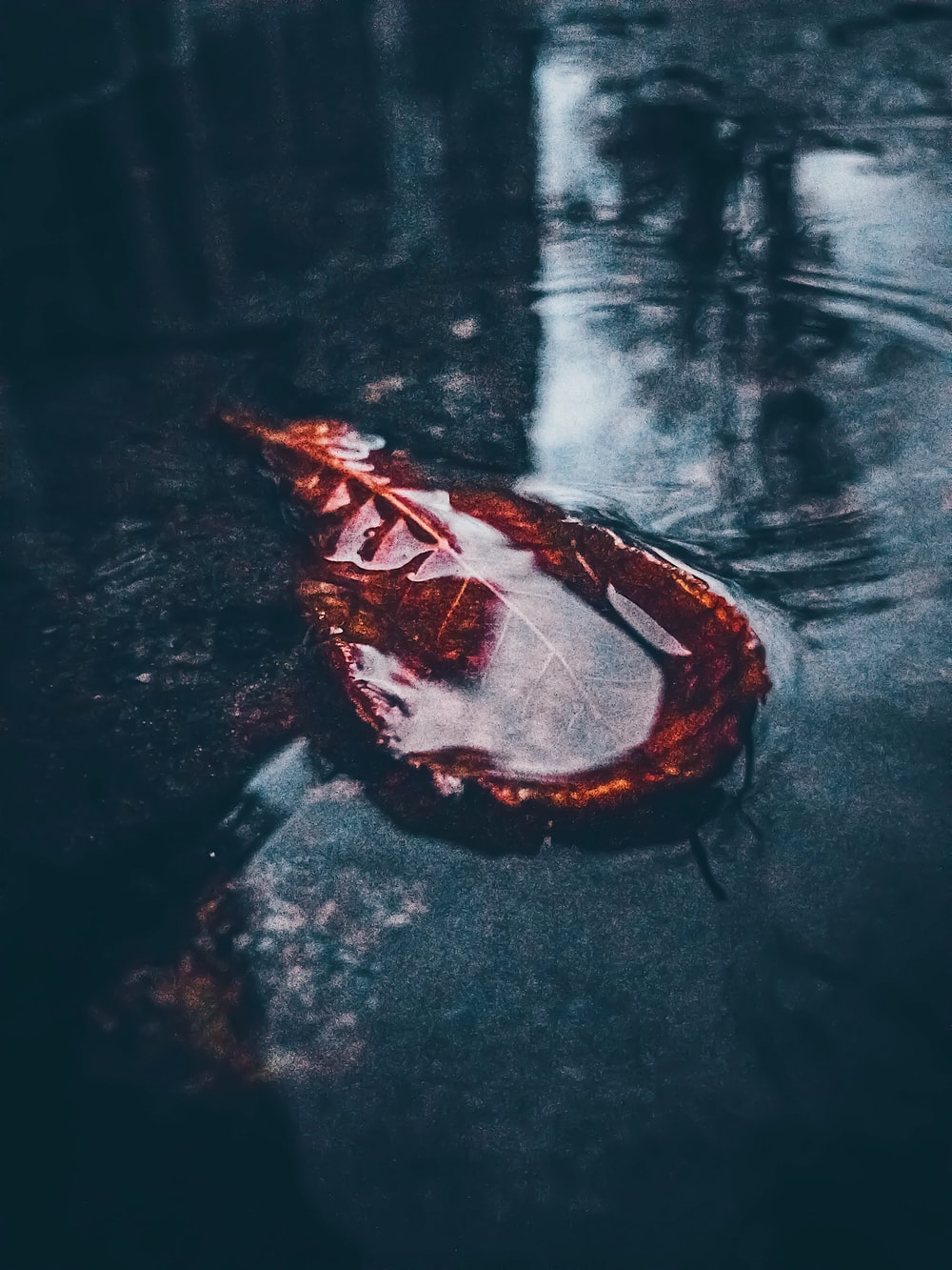 red leaf on body of water