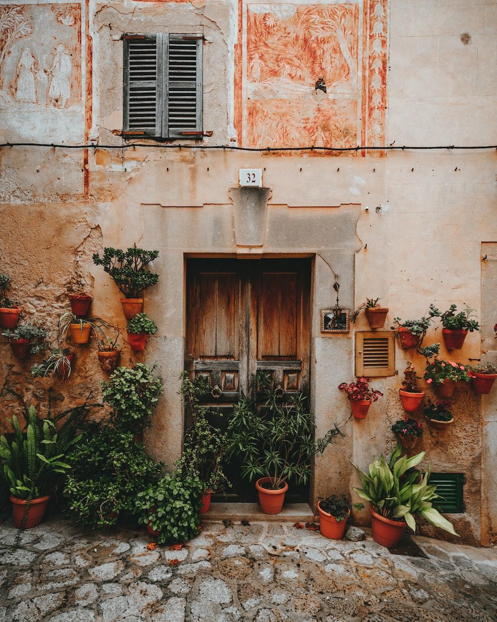 green plants near door