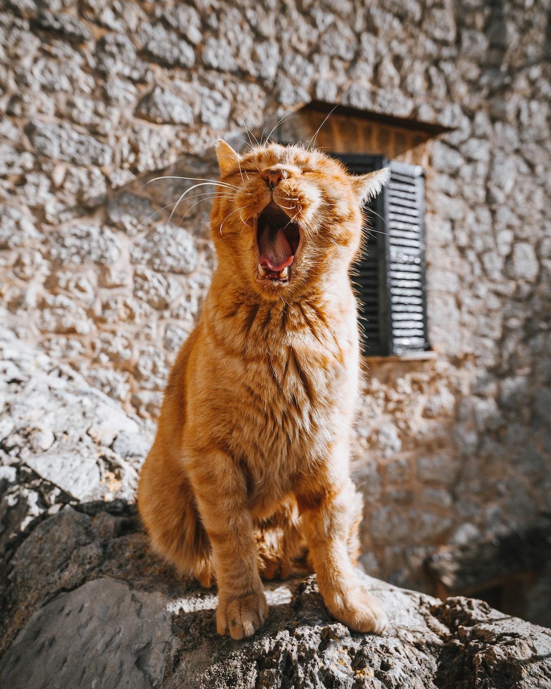 Valldemossa cat II – instagram.com/hrrbhn