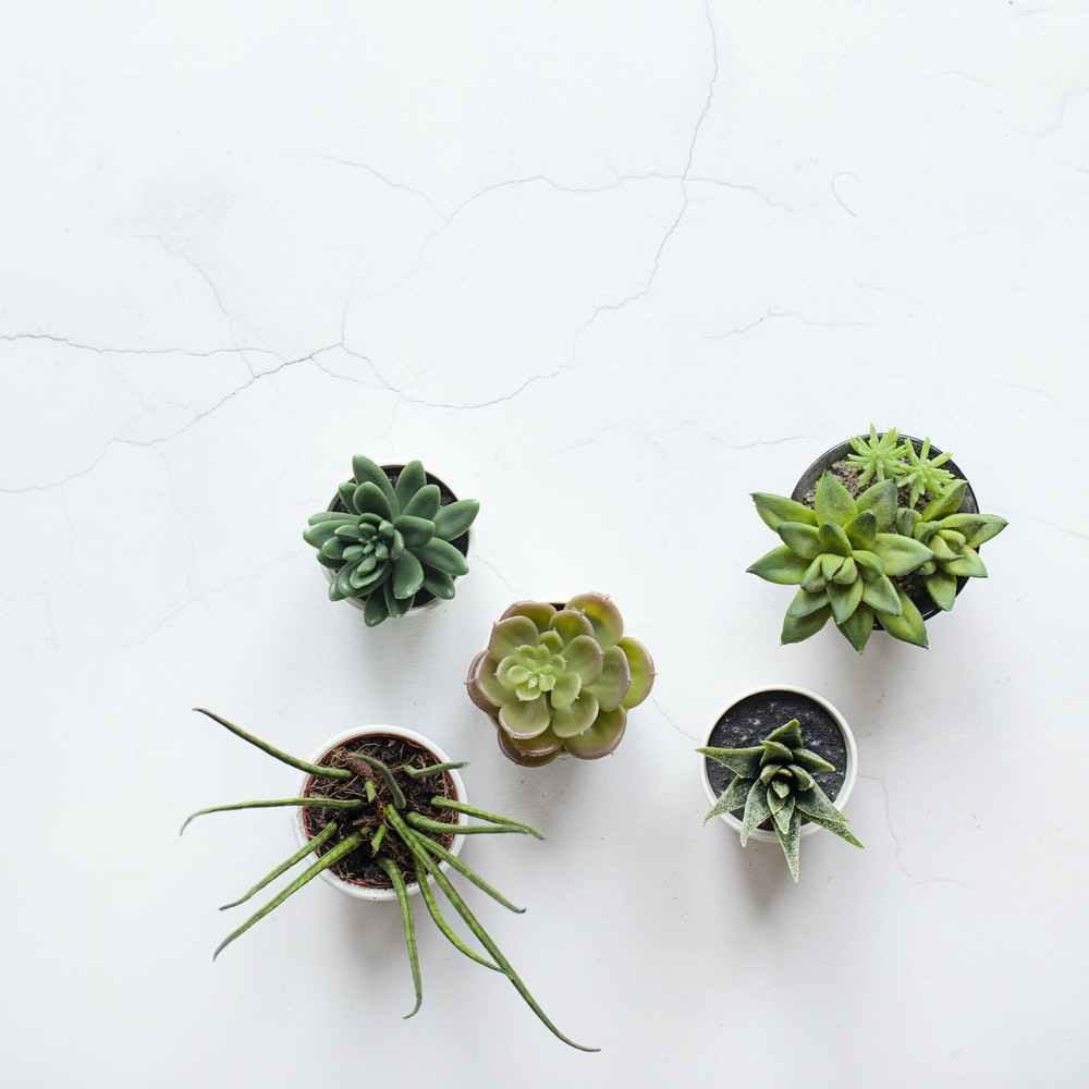 five assorted succulent