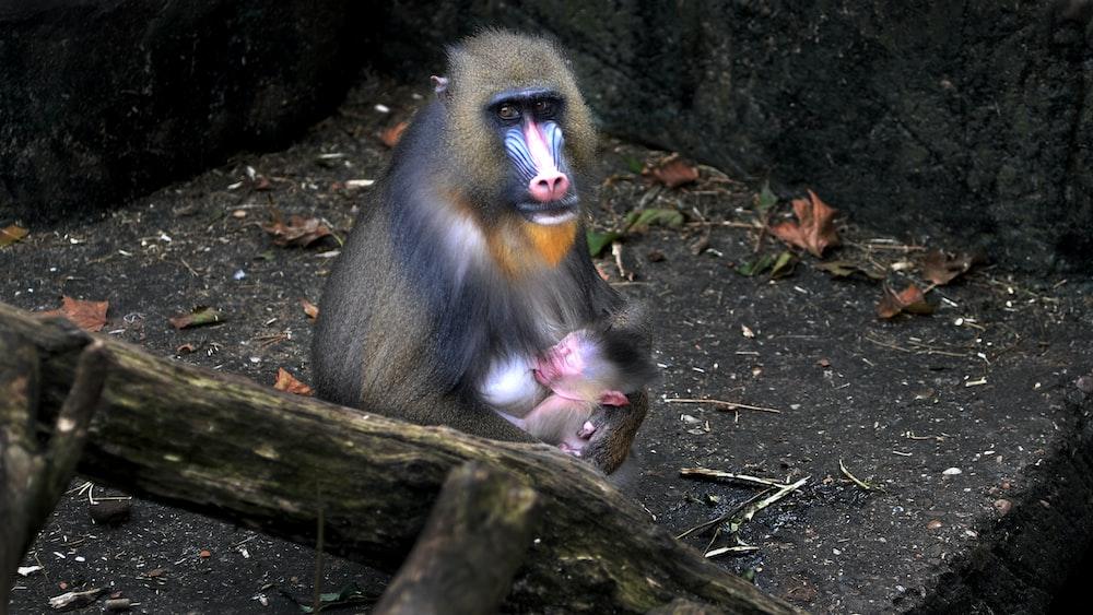 grey and white monkey during daytime