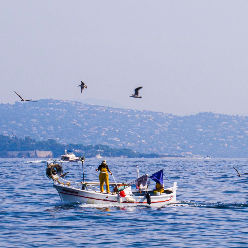 birds flying over a man in a fishing boat