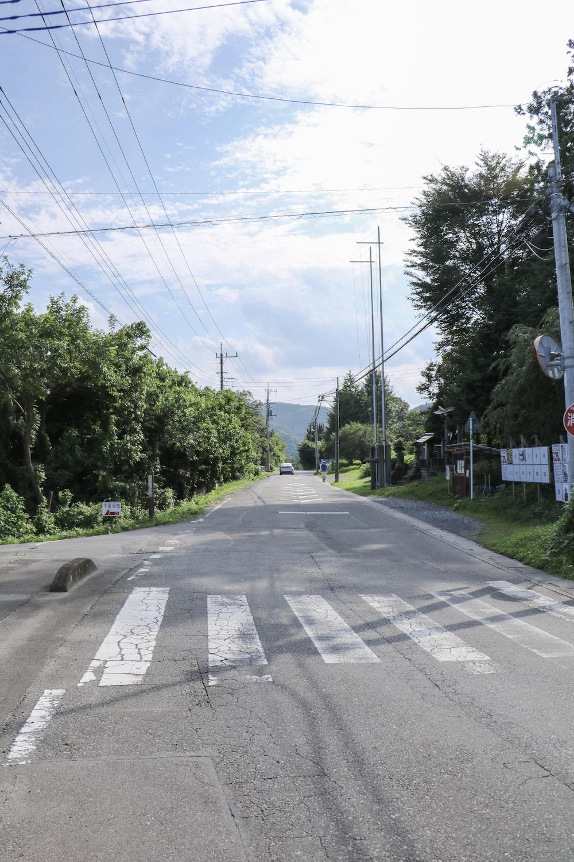 gray concrete street between green trees