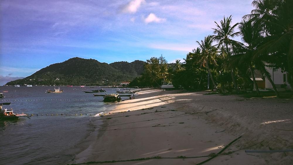 ocean beside coconut palm trees