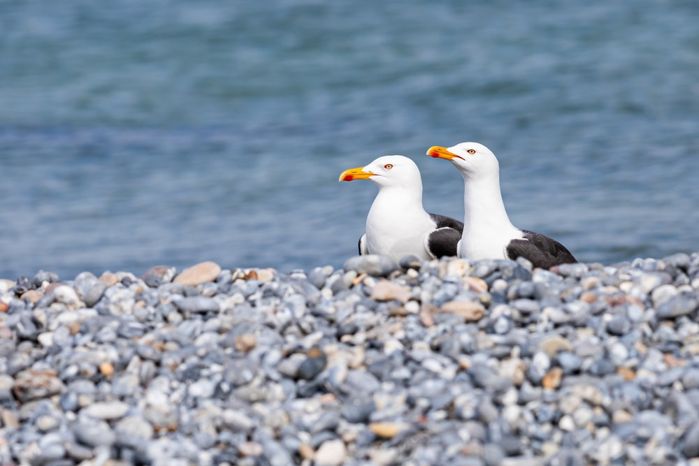 two white birds