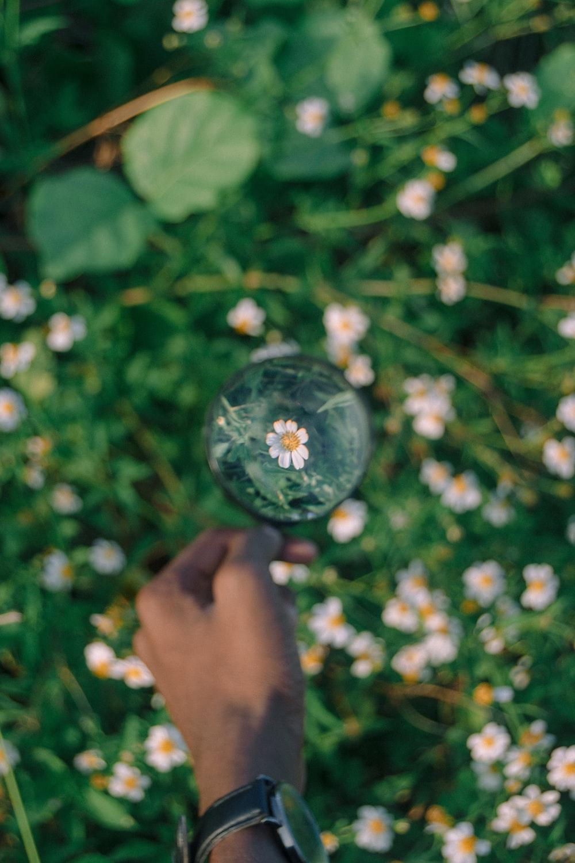 white daisy flowers in bubble