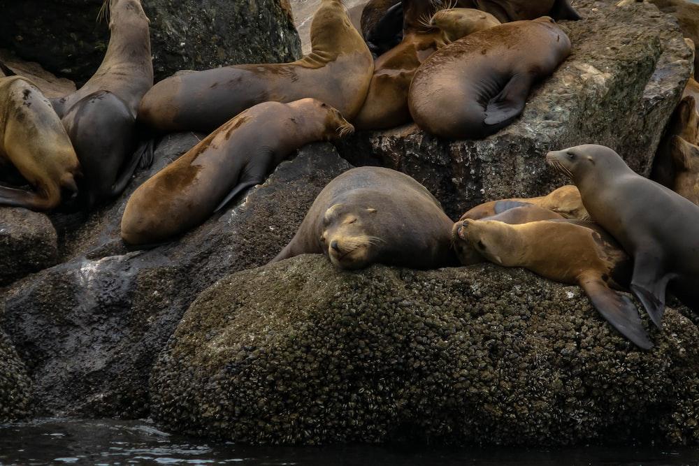 group od seal