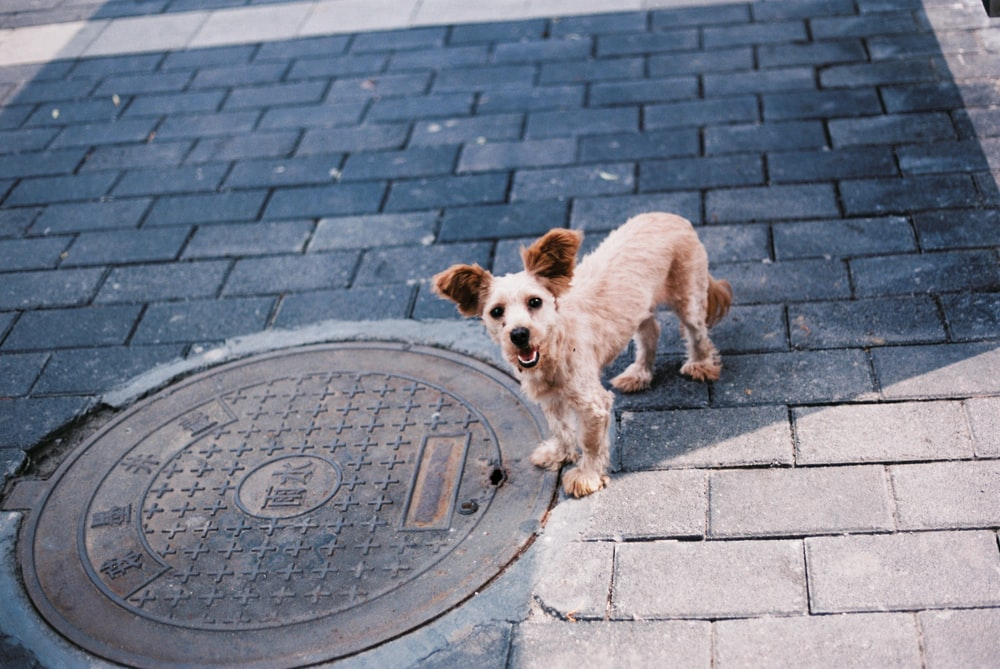 brown short-coat dog on concrete floor