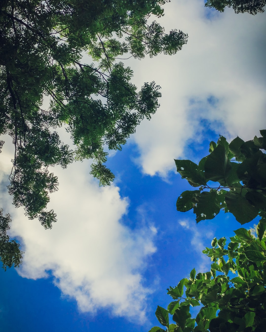 Trees and sky!