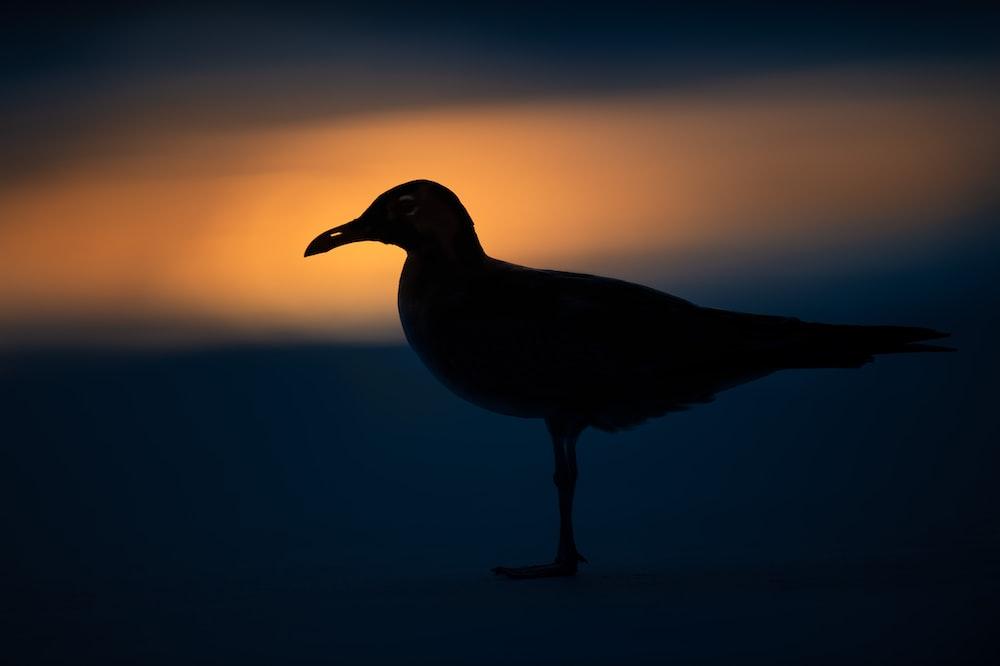 black bird close-up photography