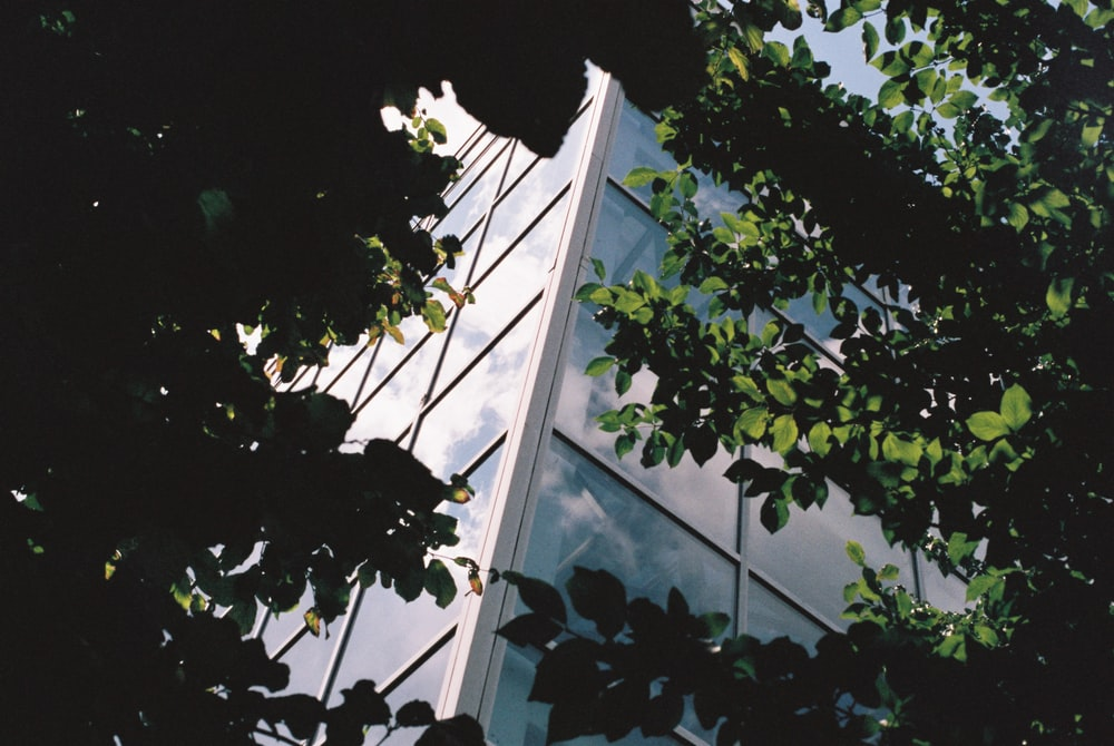 green trees near building during day