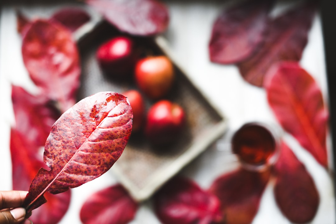 Autumn red leaves on a fall background with apples