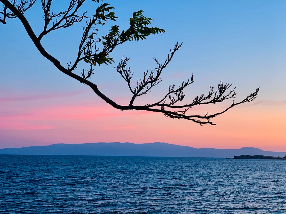 green leafed tree near body of water during golden hour