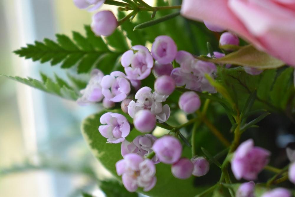 selective focus photo of purple-petaled flower