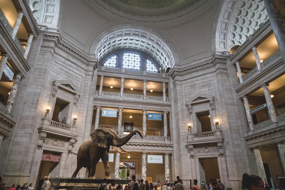 gray elephant statue