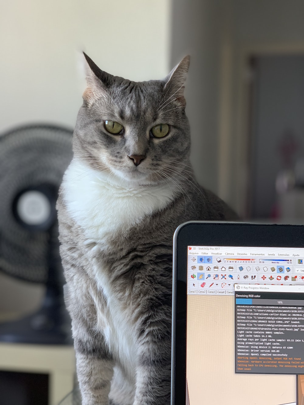 gray cat beside laptop computer